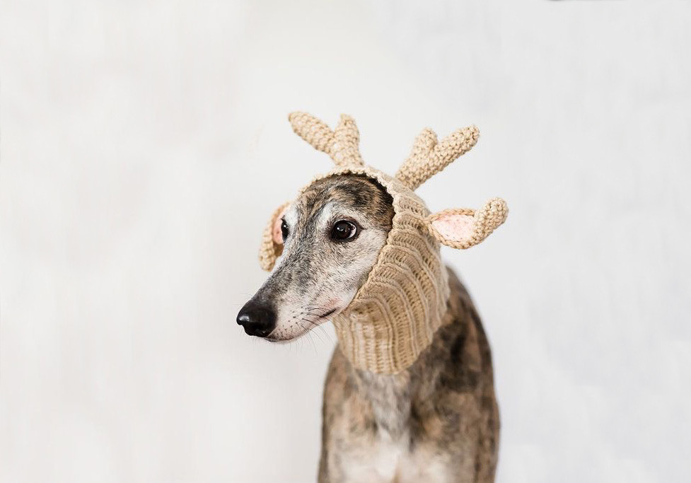 how-to | clean pet reindeer messes